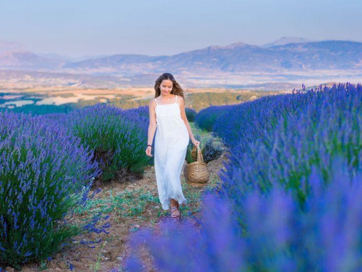 Fairy of Lavender
